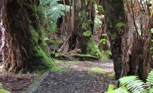 Niaulani Nature Walk @ Volcano Art Center Niaulani Campus | Volcano | Hawaii | United States
