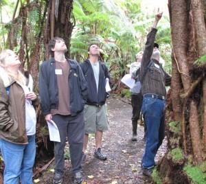 Niaulani Forest1
