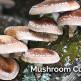 MushroomCultivation