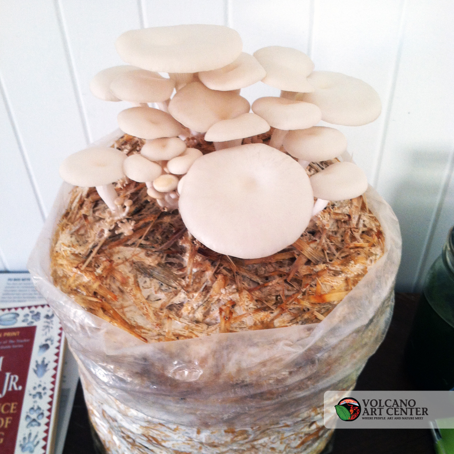 MushroomCultivation-mushroom2