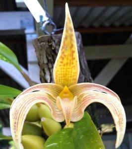 Orchid Workshop October