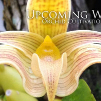 ORchidCultivation