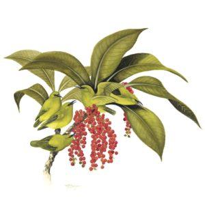 Hawaii-Amakihi-plant-haha