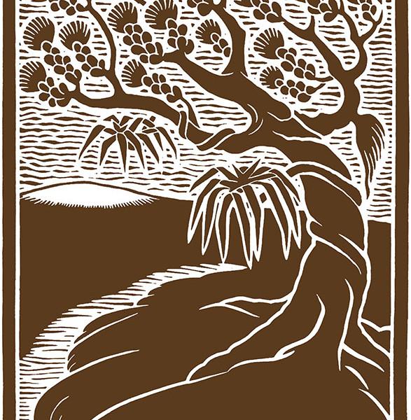 M11 'Ohi'a Tree