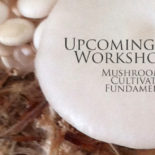 Workshop: Growing Edible & Medicinal Mushrooms
