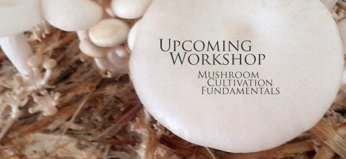 Workshop: Mushroom Cultivation Fundamentals