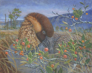 Life of the Lands exhibit - Daniel Van Zyle