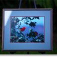 Jack Jeffery- Framed Photo of I'iwi
