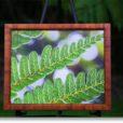 "Lanaya Deily - ""Endemic Understanding"""
