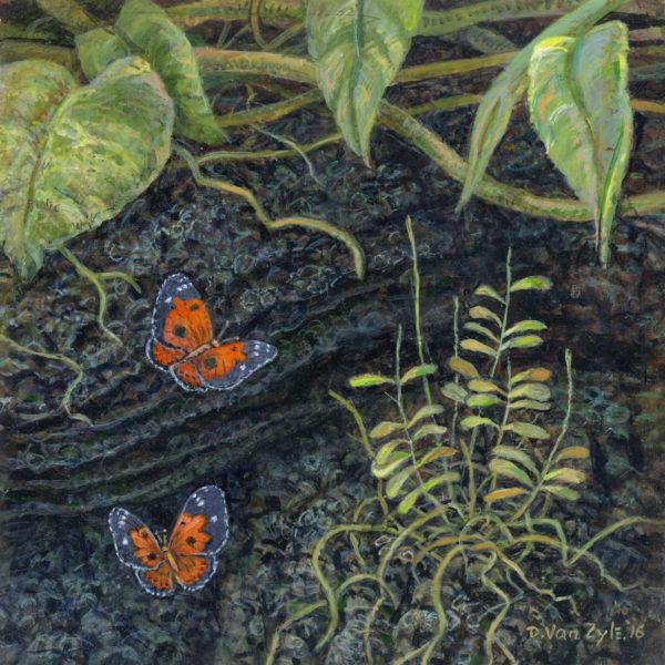 Playing. Kamehameha Butterflies II