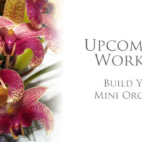 Workshop-BYO-Mini-Orchid-Display