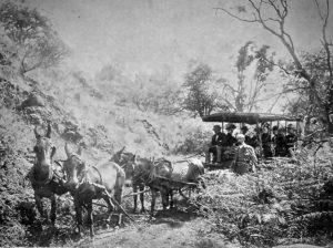 Carriage Road from Punaluu - Hawaiian Historical Society