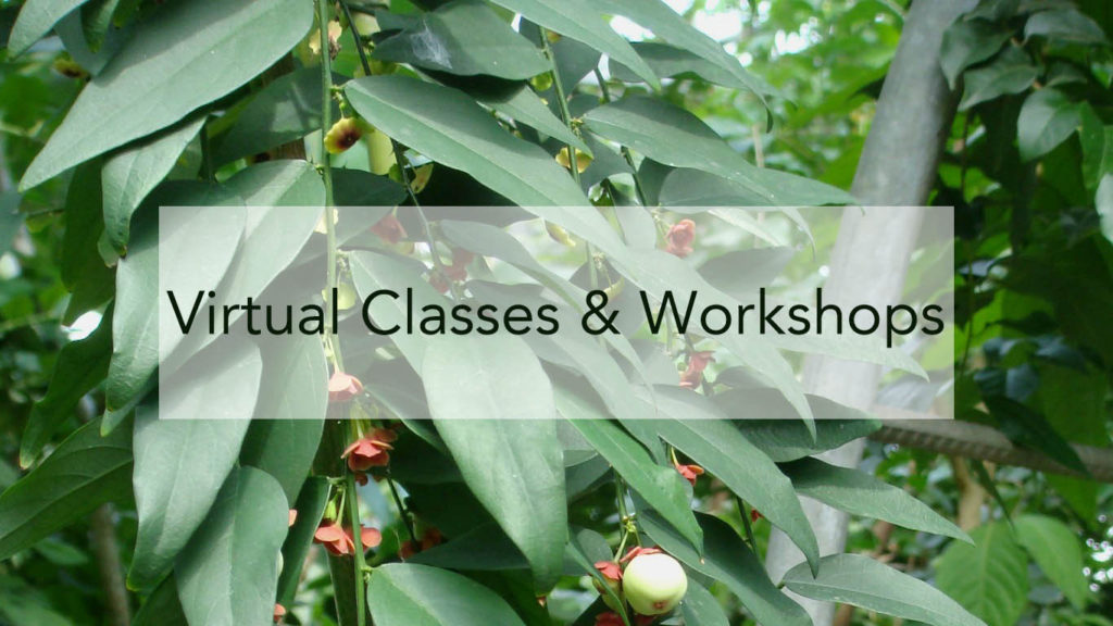 Virtual Classes and Workshops Graphic