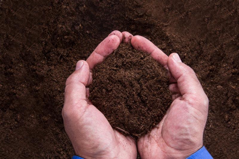 Online Zoom Workshop: Secrets of the Soil: DIY Strategies for Soil Regeneration with Zach Mermel