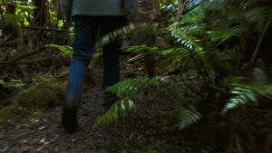 volcanoartcenter.org_rain-forest_activities_ HEADER