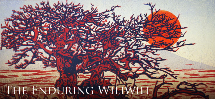 New Exhibit at Volcano Art Center | The Enduring Wiliwili