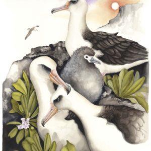 Laysan-Albatross-0423