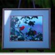 Jack Jeffery- Framed Photo of I'iwi