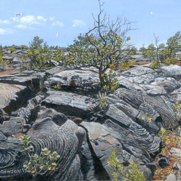Ohia from Lava