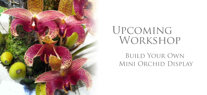 Make Your Own Mini Orchid Display