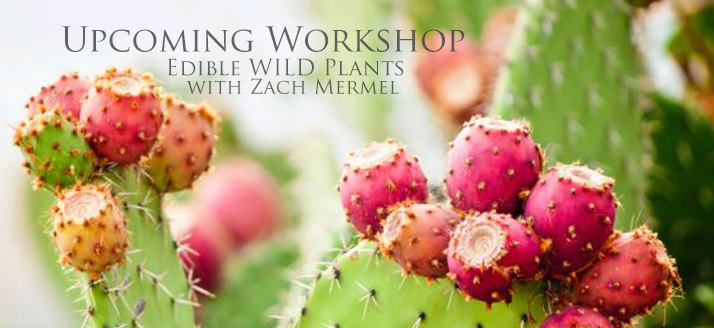 Workshop: Edible Landscaping for Backyards