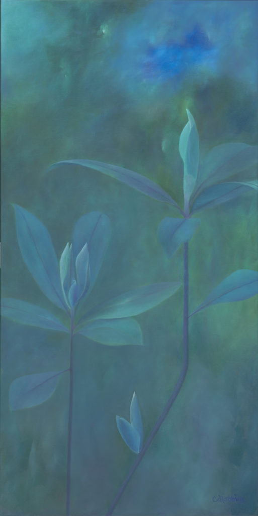Song For The Rain Forest by Catherine Robbins