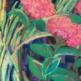 Workshop-Pastel-Landscape-Patti-Pease-VAC
